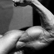 Musculation body building