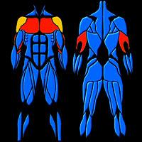 Akelys - Exercice de musculation   Répulsion triceps df109389def