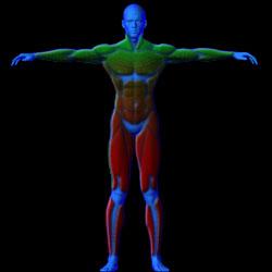 Échauffements avant une séance de musculation, conseil