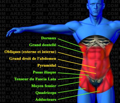 28d5a10b0ae48 Dossier spécial : Abdominaux, Développement des muscles de la ceinture  abdominale centrale - Akelys, Exercices de musculation